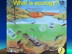 What is ecology Ecology Ecology scientific study of