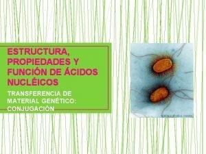 ESTRUCTURA PROPIEDADES Y FUNCIN DE CIDOS NUCLICOS TRANSFERENCIA