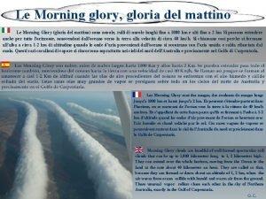 Le Morning glory gloria del mattino Le Morning