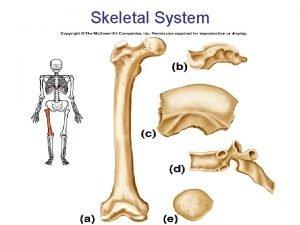 Skeletal System The Skeletal System Parts of the