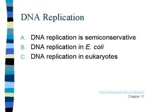 DNA Replication DNA replication is semiconservative B DNA