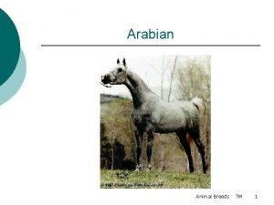 Arabian Animal Breeds TM 1 Appaloosa Animal Breeds