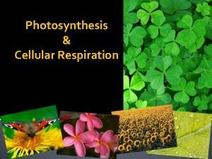 Photosynthesis Cellular Respiration Photosynthesis Vocabulary Photosynthesis A process