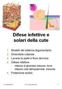 Difese infettive e solari della cute Modelli del