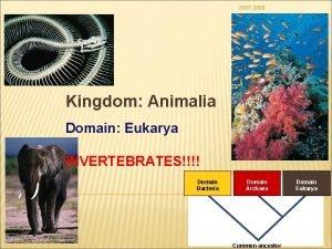 2007 2008 Kingdom Animalia Domain Eukarya INVERTEBRATES Domain