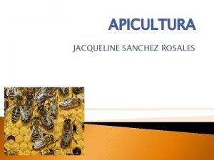 APICULTURA JACQUELINE SANCHEZ ROSALES APICULTURA La apicultura es