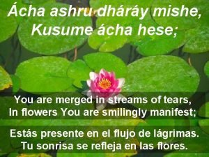cha ashru dhry mishe Kusume cha hese You