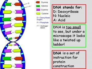 DNA stands for D Deoxyribose N Nucleic A