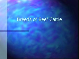 Breeds of Beef Cattle Angus n n Originated