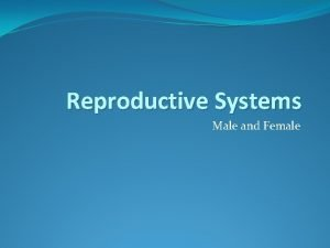 Reproductive Systems Male and Female Egg Female sex