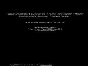 Vascular Apolipoprotein E Expression and Recruitment from Circulation