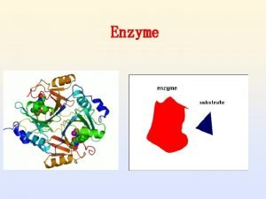 Enzyme Why Are Enzymes So Important Why are