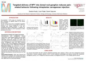 PW 255 Targeted delivery of NPY into dorsal