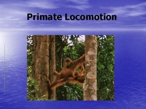 Primate Locomotion Primate Locomotion Some primates are arboreal