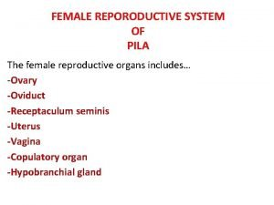 FEMALE REPORODUCTIVE SYSTEM OF PILA The female reproductive