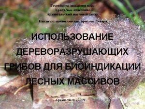 Kotiranta Niemel 1996 Anomoporia bombycina Antrodia pulvinascens Asterodon
