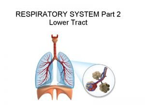 RESPIRATORY SYSTEM Part 2 Lower Tract LUNGS spongy