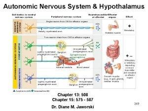 Autonomic Nervous System Hypothalamus SOMATIC NERVOUS SYSTEM Cell
