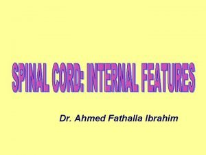 Dr Ahmed Fathalla Ibrahim TRANSVERSE SECTION T 1