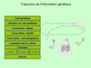 Traduction de linformation gntique Code gntique Utilisation du