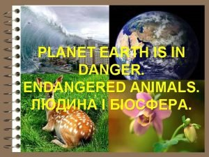 PLANET EARTH IS IN DANGER ENDANGERED ANIMALS The