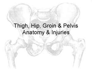 Thigh Hip Groin Pelvis Anatomy Injuries Bones Femur