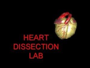 HEART DISSECTION LAB Procedure 1 Obtain a dissection
