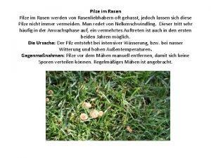 Pilze im Rasen werden von Rasenliebhabern oft gehasst