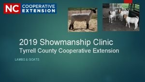 2019 Showmanship Clinic Tyrrell County Cooperative Extension LAMBS