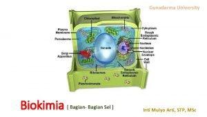 Gunadarma University Biokimia Bagian Bagian Sel Inti Mulyo
