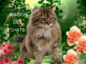 LA MISSION DES CHATS Savezvous que les chats