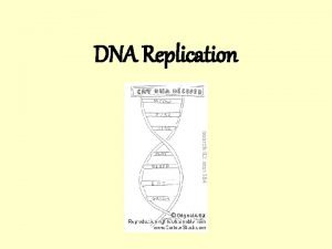 DNA Replication Replication and cell division All DNA