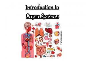 Introduction to Organ Systems Respiratory System Lungs breathe