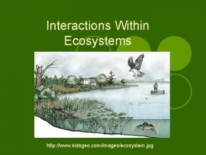 Interactions Within Ecosystems http www kidsgeo comimagesecosystem jpg