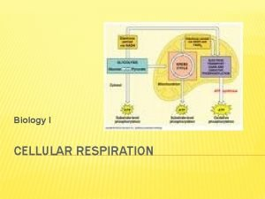 Biology I CELLULAR RESPIRATION CELLULAR RESPIRATION the process