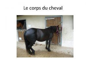 Le corps du cheval Les membres des quids