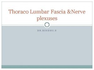 Thoraco Lumbar Fascia Nerve plexuses DR BINDHU S