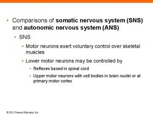 Comparisons of somatic nervous system SNS and autonomic