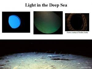 Light in the Deep Sea Photos courtesy of