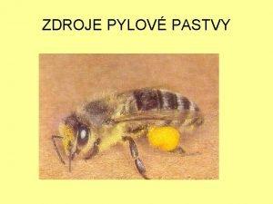 ZDROJE PYLOV PASTVY Hlavn zdroje pylu v jednotlivch