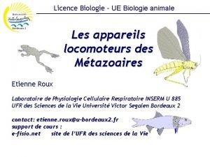 Licence Biologie UE Biologie animale Les appareils locomoteurs