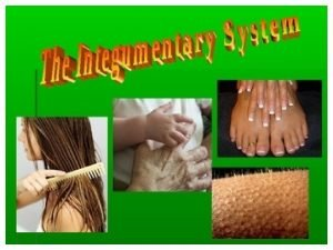 Learning Objectives Define integumentary system terminology Describe the