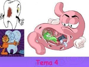 Tema 4 El aparato digestivo Tuvo digestivo comienza