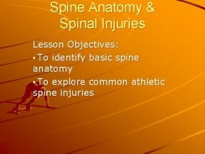 Spine Anatomy Spinal Injuries Lesson Objectives To identify