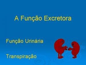 A Funo Excretora Funo Urinria Transpirao Funo Excretora