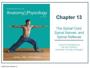 Chapter 13 The Spinal Cord Spinal Nerves and