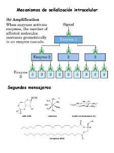 Mecanismos de sealizacin intracelular Segundos mensajeros Mecanismos de