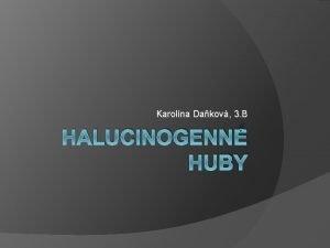 Karolna Dakov 3 B HALUCINOGENN HUBY Halucinogn Halucinogn