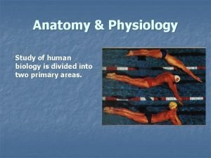 Anatomy Physiology Study of human biology is divided