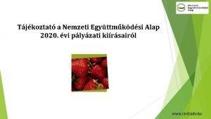 Tjkoztat a Nemzeti Egyttmkdsi Alap 2020 vi plyzati
